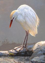 Flooded Field - Cattle Egret by Nambroth