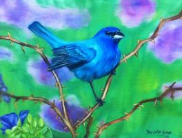 Indigo Bunting by Dani-Wicked