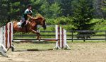 Jumping Horse Stock by Ghost-Rebel-Stock