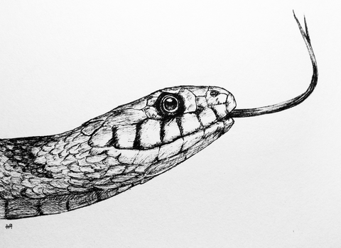 inktober04 - a snake by iva-draws