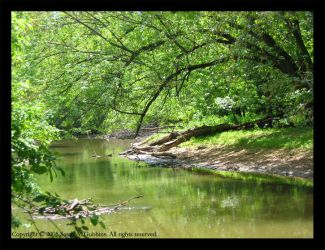Misty River in Summer by silverdreams