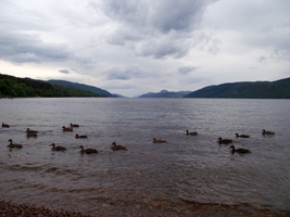 Loch Ness ducks by DanaVarahi