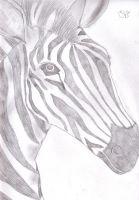 Zebra Sketch by TheRebelWithNoCause