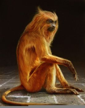 Golden Monkey 1 by aaronsimscompany