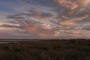 Bodie Island Marshes by pewter2k