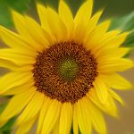 Perfect Sun by VasiDgallery
