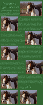 Horse Eye Tutorial by PhoenixAureus