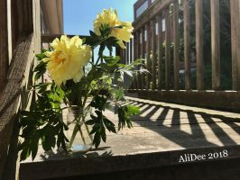 Yellow Flowers in the Sunshine by AliDee33