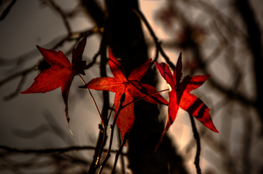 Red Leaves number 37 by MagicLightAdventures