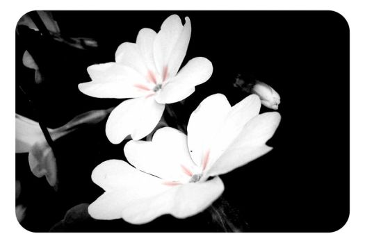 Black and white flowers by alixia88