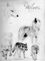 Wolf Studies by S0ngSparr0w
