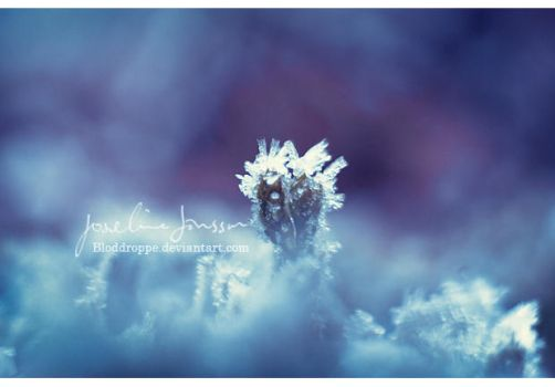 _winter cold 02 by Bloddroppe-nature