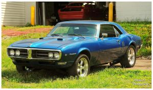 A Sharp Pontiac Firebird by TheMan268
