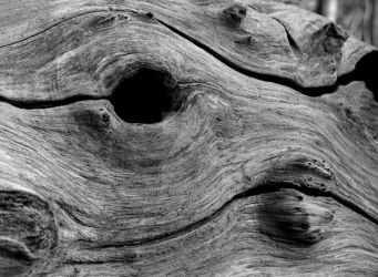 Knotty Wood by roobaa