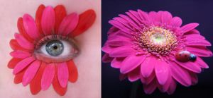 Eye Flower by KatherineDavis