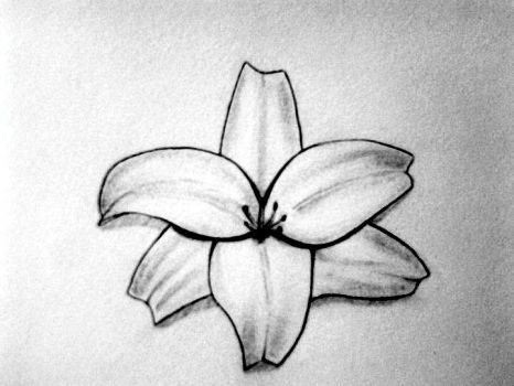 Lily Sketch Tattoo Design 2 by tksb1981