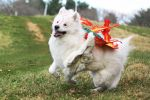 OKAMI : Happy Go Lucky by EnchantedCupcake