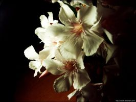 White Oleander by ritUsik
