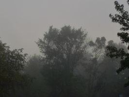 misty morning by almosthuman75