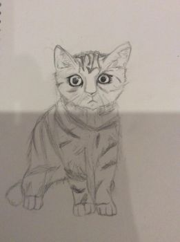 Kitten Sketch by MadMaddiey