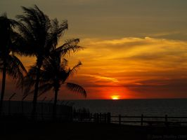 Palms against Tropical Sunset by jmotbey