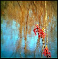 Tree buds Over a Pond by surrealistic-gloom