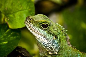 Little Reptile by Linkineos