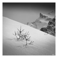 the larch and the mount by rdalpes