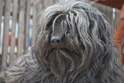 Our dog Blacky close-up by bvencel