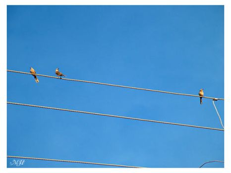 Wires by maryxinhaaa
