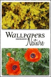 Wallpapers Nature by AgospeiLovatic