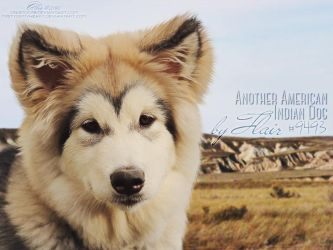 Another American Indian Dog By Flair by a-llix