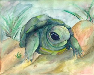 Watercolor Turtle by LossingFeathers