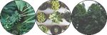 plants | f2u decor by toff-u