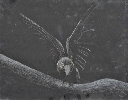scratchboard parrot by rainbow-falls