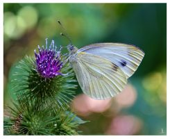 Butterfly for Brian by JankaLateckova