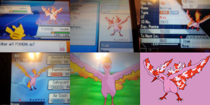 Shiny Moltres! by ThatCharizardGuy