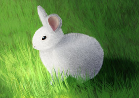 Bunny stepping into sunlight (Daily 27) by Aurora-Alley