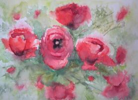 Mohn 2 by uschibeckert