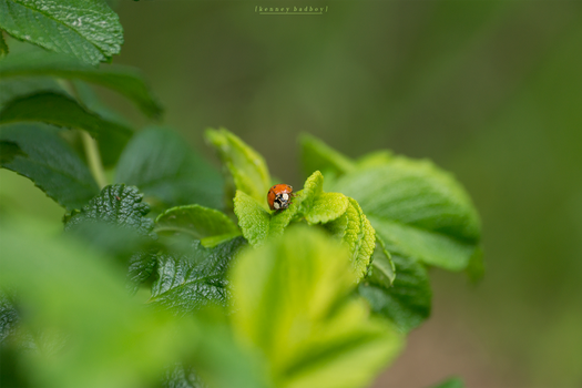 -- ladybug by Cue-the-Cannibal