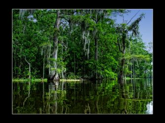 The Beautiful Green Of The Swamp by MissKajunKitty