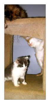 Escher Like Kitten Situation by Don-Sarcasmo