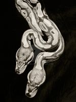 Snakes by PriscillaW