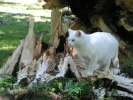 Cat with Broken Trunk 6 by loopyker-stock