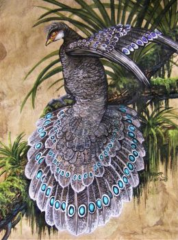Grey Peacock Pheasant  by HouseofChabrier