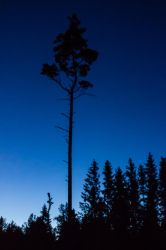Night forest in Sweden by bormolino