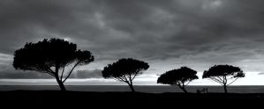 Four trees... by marcopolo17