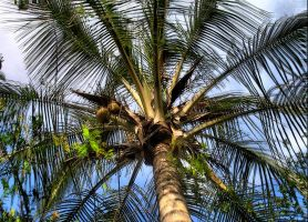 HDR palm tree by sixt0p