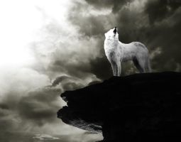 Moonless Howl by Tribalchick101