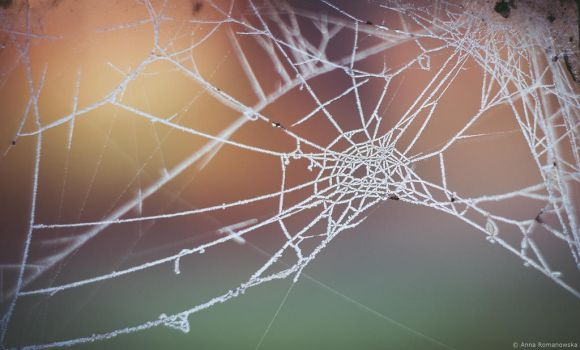 Frozen web by Anlin
